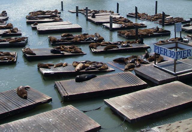 San Fransico Pier